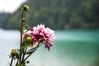 Flower by Hintersteiner See