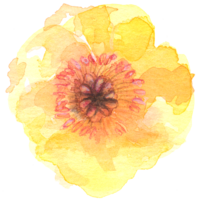 yellow_flower_front