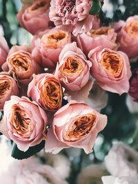 pink-rose-flower-bouquet-931167 copy