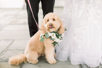 dog standing in front of bride and groom