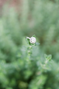 a circle diamond engagement ring sitting on top of greenery at Elon College in Burlington