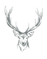 English Stag