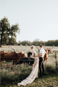 bride-and-groom-petting-cows