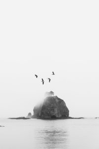 Birds-Over-The-Olympic-Peninsula-Kyle-Goldie-Gallerie-w