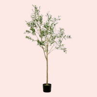 Shop My Home - Olive Tree