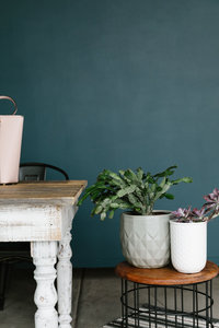 Christmas cactus and succulent plant next to an antique, white and brown wooden desk with a pink purse