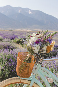 Lavender Bridals Utah Lavender Feilds Utah Wedding Photography Life Looks Photography01-15