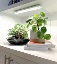 House plants on book shelf lit by grow light