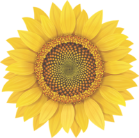 Sunflower from Logo