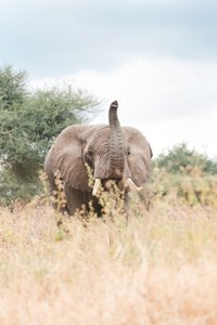elephant-tanzania-vacation-photographer-cameron-zegers