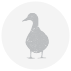 Gray Duck Watermark