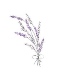 drawn-lavender-pencil-360195-3776427