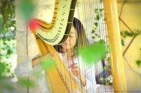 Gold Coast Harpist