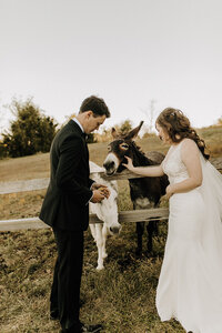 Bride and groom petting donkeys