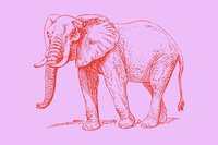 A red line drawing of an elephant on a pink background.