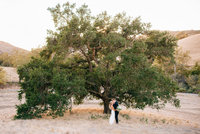 San Luis Obispo wedding photography at Higuera Ranch oak tree by Amber McGaughey