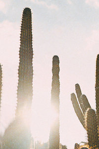 Canva - Green Cactus