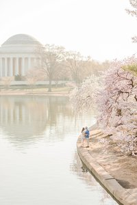 couple standing beside tidal basin in washington dc during cherry blossoms by costola photography