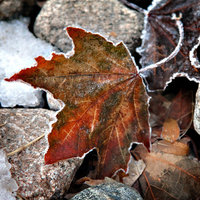 Leaf in ice 2 4x4 v2