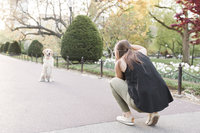 Dog photographer taking pictures of dog in park