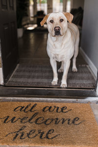 yellow lab standing at front door with welcome mat
