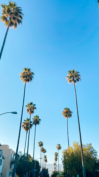 palm tree lined street in Pasadena, California. Photo taken by Cheers babe Photo.