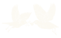 east-and-west-designs-bird-icon
