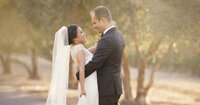 Bride and Groom at Sunset in Olive Trees At Charles Krug Winery