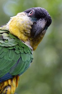 parrot colombia