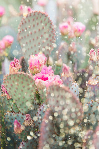 Beavertail Prickly Pear Cactus Glitter