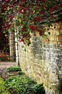 Cotswold Crabapples 2