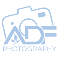 adf photograpy Light Blue