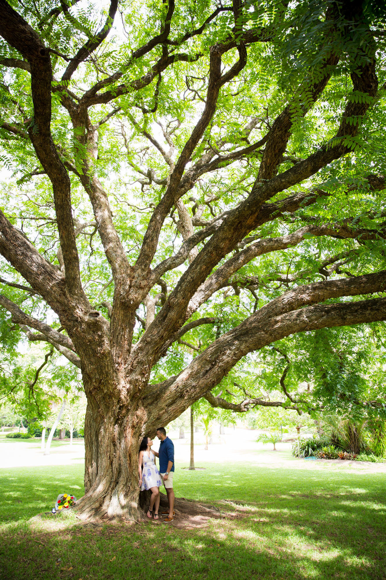Rohil_Manisha_Brisbane_botanical_gardens_proposal_AnnaOsetroff_Photographer_preview-6