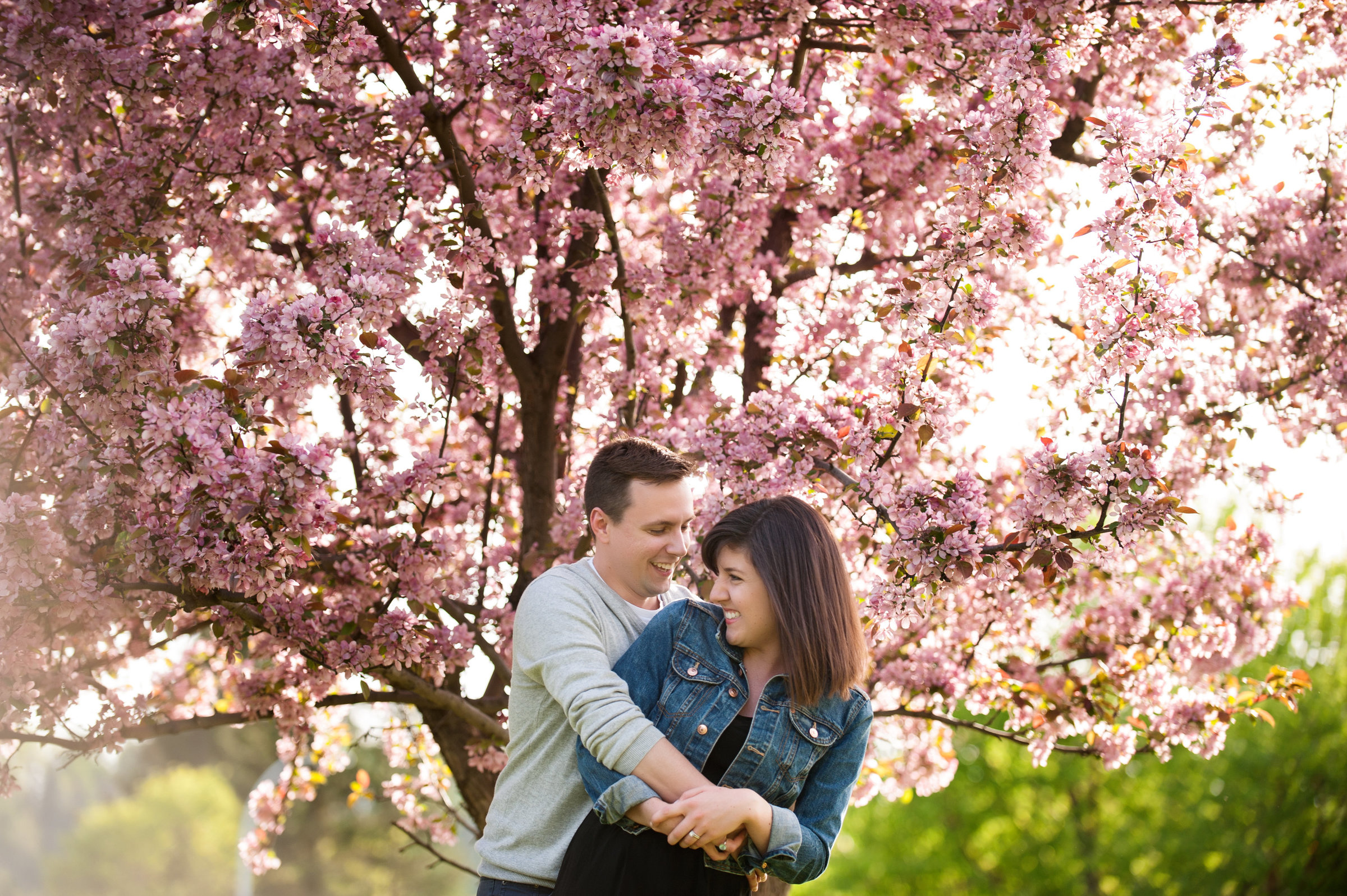 Couple and cherry blossoms in Edmonton Alberta