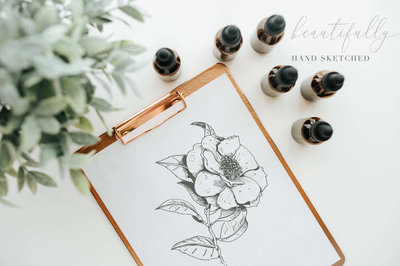Sketched botanical clipart by The Autumn rabbit
