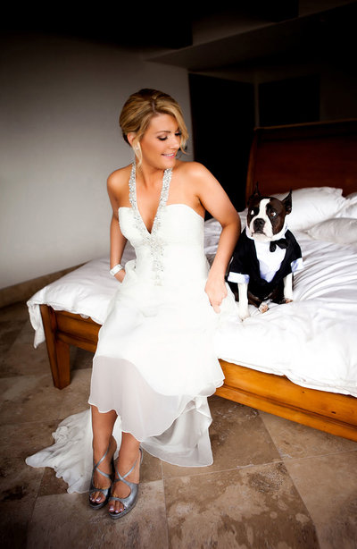 Cute moment between a bride and her Boston Terrier dog taken by ABM Photography