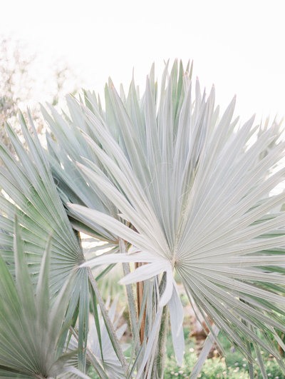 Babsie-Ly-Photography-Tropical-Palm-Tree-Leaves-Film-Wedding-California-001