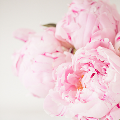 haute stock photography - florals - 1
