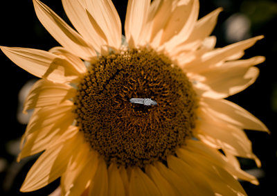 Engagement session in the sunflower field0025