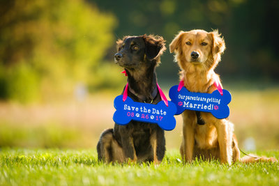 Dogs wearing signs at engagement session