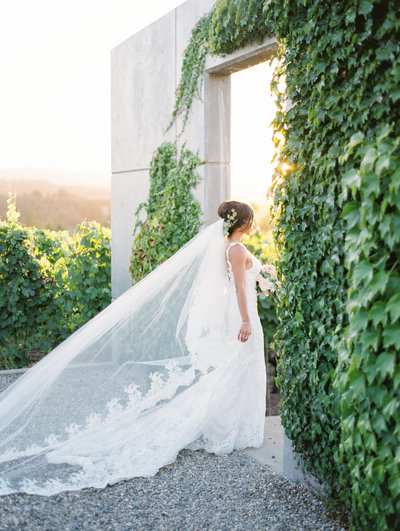 a beautiful bride walking through Ponzi Vineyards at sunset