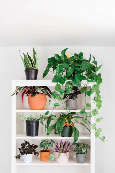 Picture of tropical houseplants on a white shelf