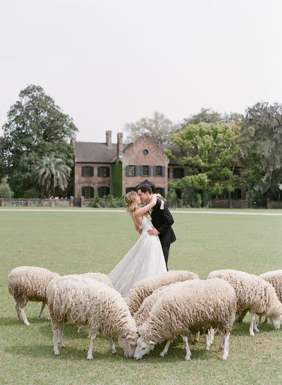 Couple getting married on the grass at Middleton Place surrounded by sheep