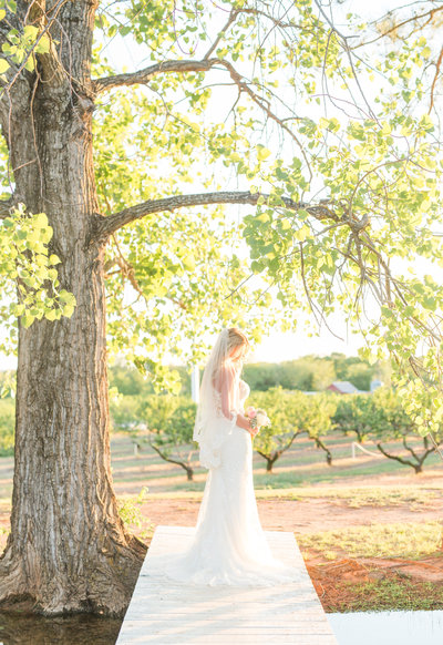Bridal picture with trees at The Lodge Event Center