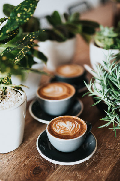Coffee-Plants
