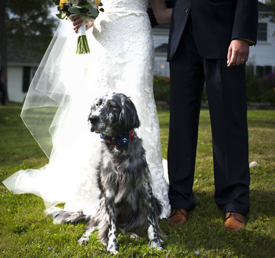 Portrait of bride, groom, & their dog on their wedding day in Portland, Maine