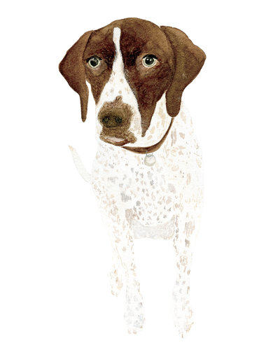watercolor-pet-portrait-Tilly-The-Welcoming-District