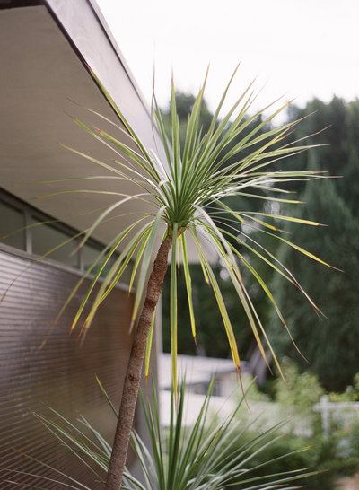 lumi photography palm at lew house