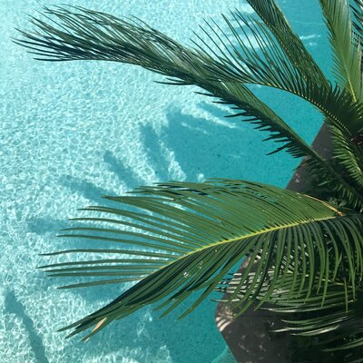 green-palm-tree-450038