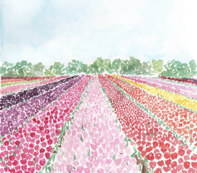 Watercolor tulip fields painting pink